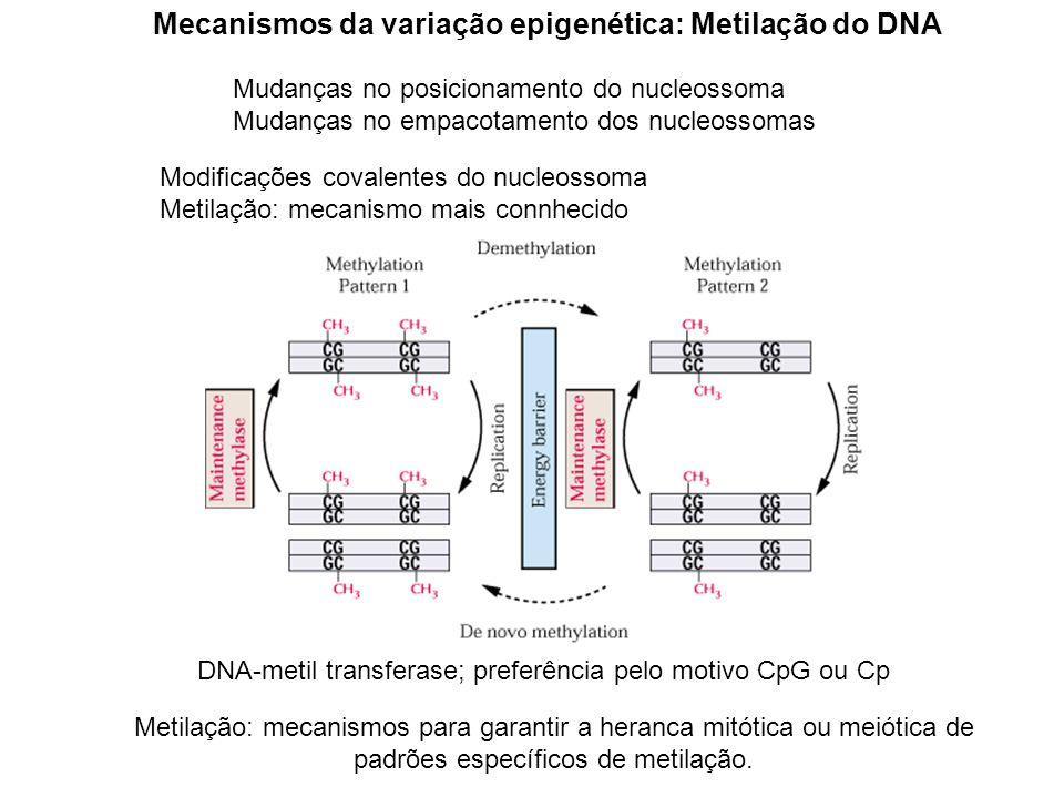 Mecanismos da variação epigenética: Metilação do DNA