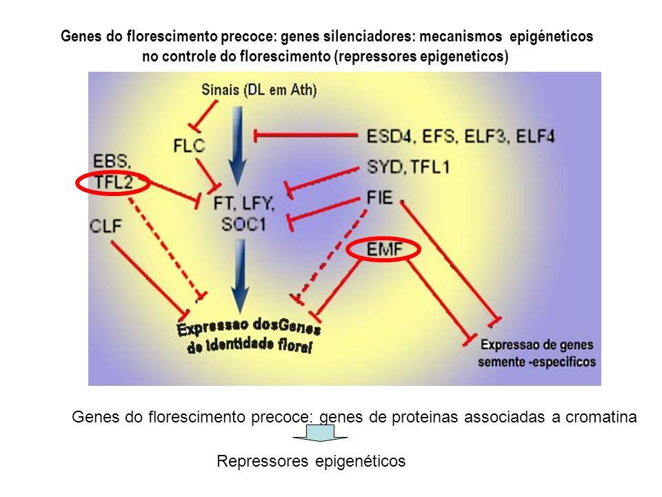Genes do florescimento precoce: genes silenciadores: mecanismos epigéneticos no controle do florescimento (repressores epigeneticos)