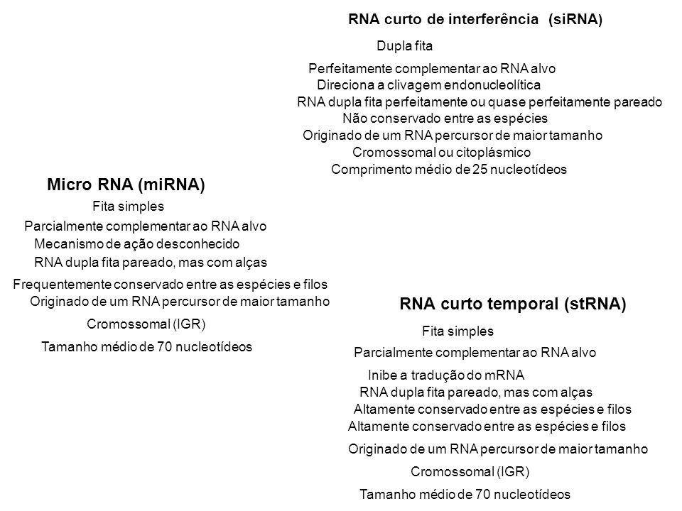 RNA curto temporal (stRNA) Micro RNA (miRNA)