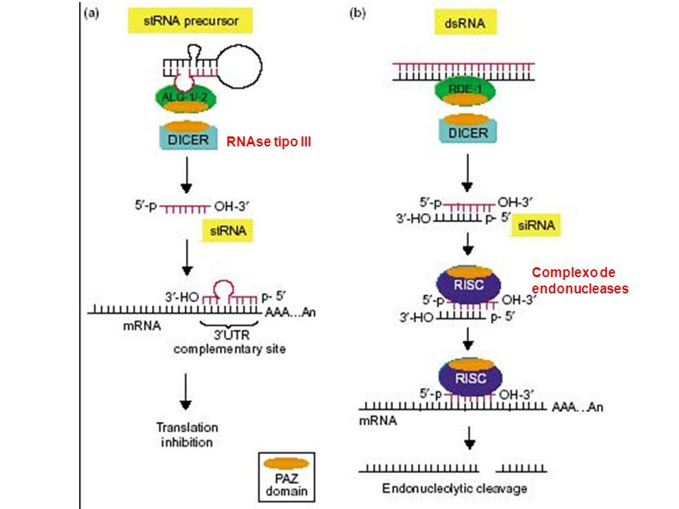 RNAse tipo III Complexo de endonucleases