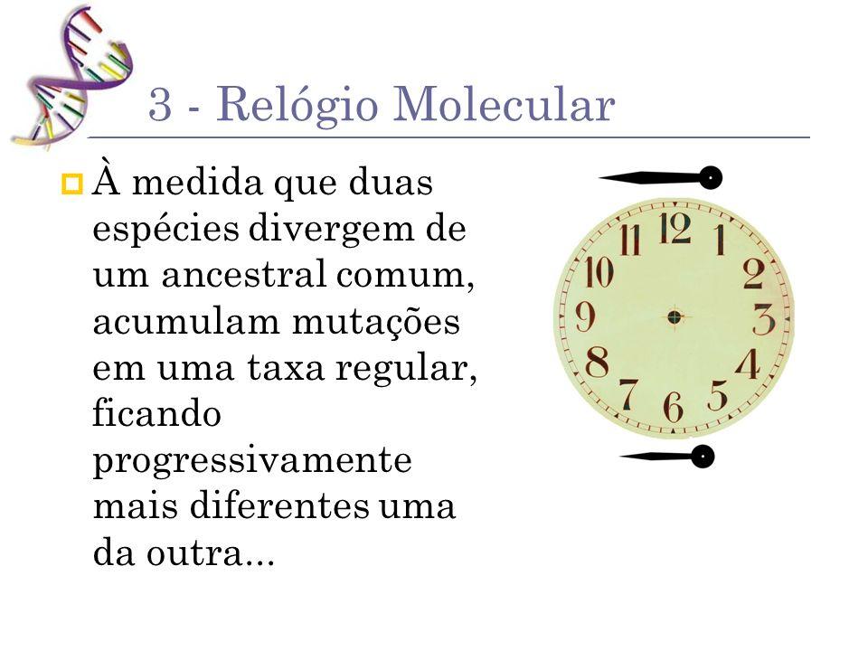 3 - Relógio Molecular