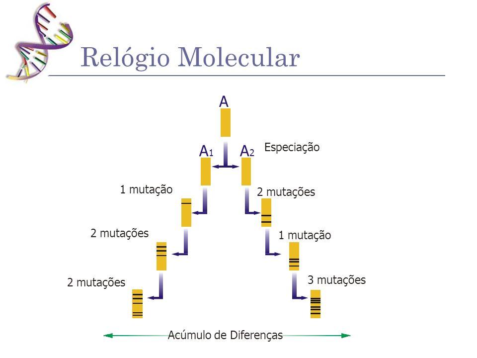 Relógio Molecular A A1 A2 Especiação 2 mutações 1 mutação 3 mutações