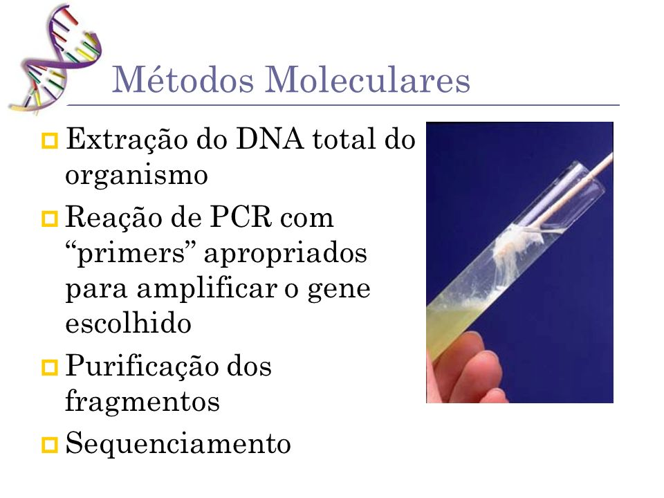 Métodos Moleculares Extração do DNA total do organismo