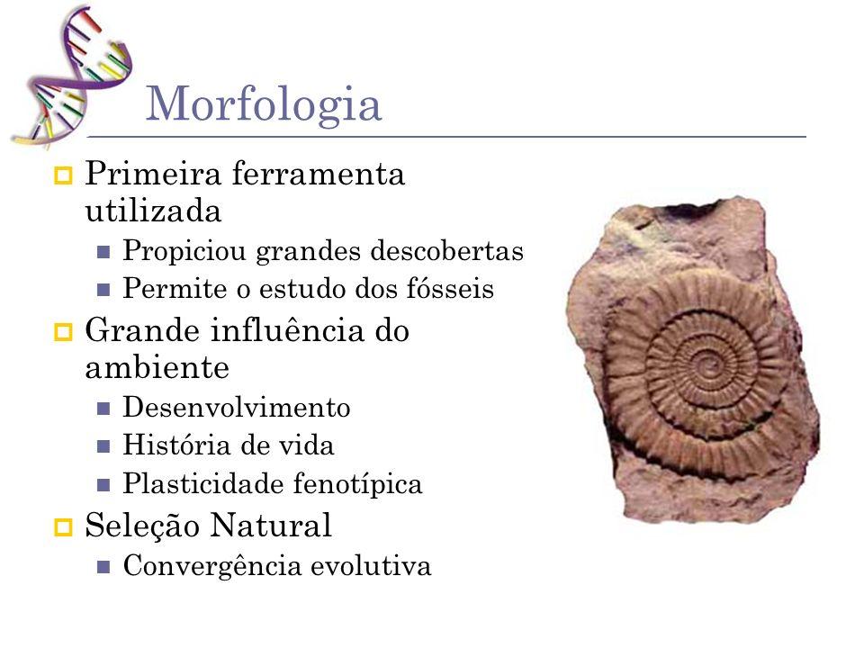 Morfologia Primeira ferramenta utilizada Grande influência do ambiente