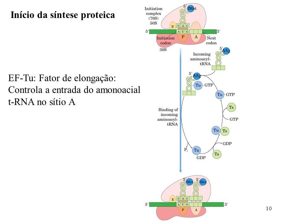Início da síntese proteica