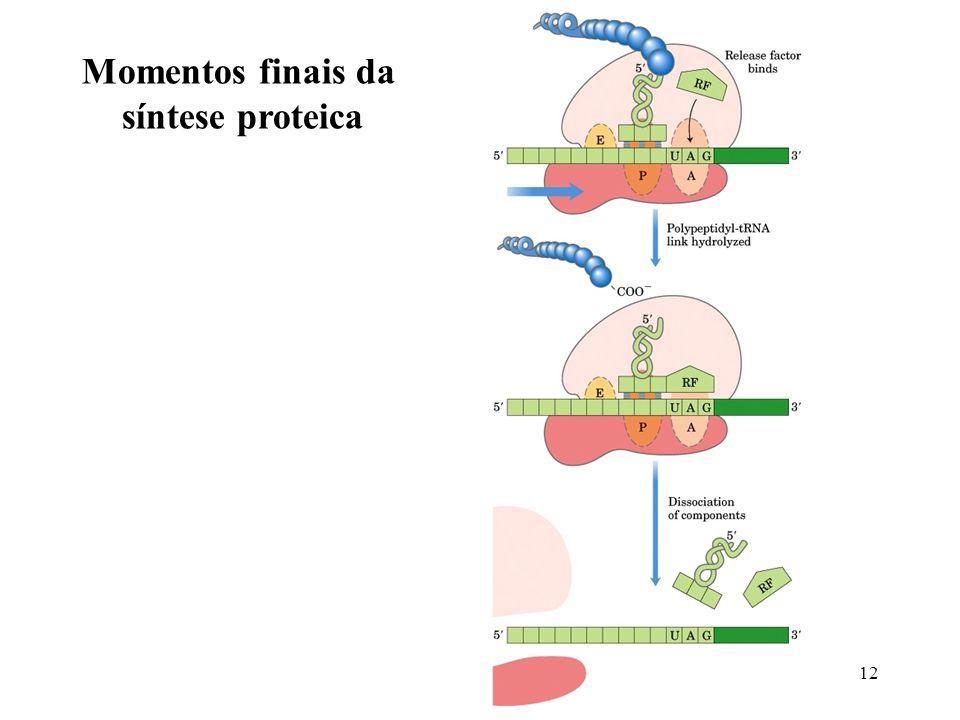 Momentos finais da síntese proteica