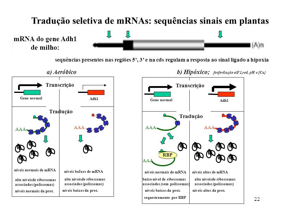 Tradução seletiva de mRNAs: sequências sinais em plantas