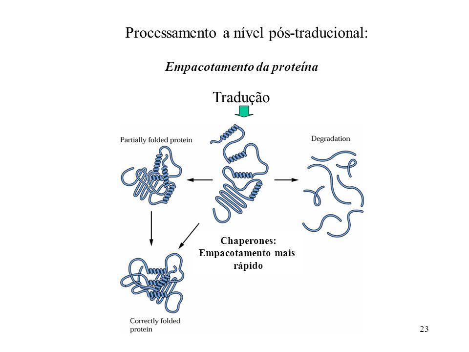 Processamento a nível pós-traducional: