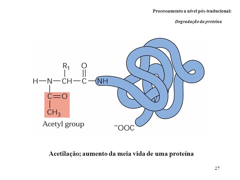 Acetilação; aumento da meia vida de uma proteína