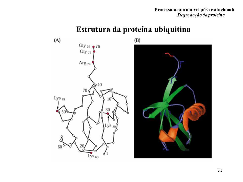 Estrutura da proteína ubiquitina
