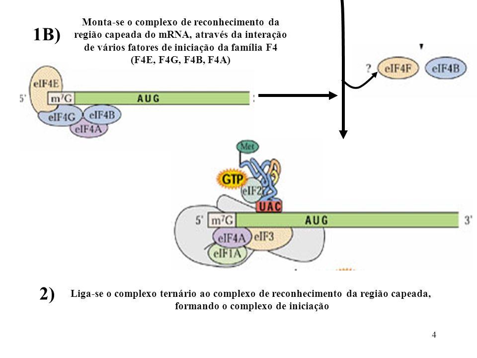 1B) 2) Monta-se o complexo de reconhecimento da