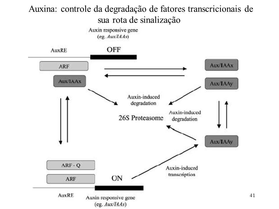 Auxina: controle da degradação de fatores transcricionais de