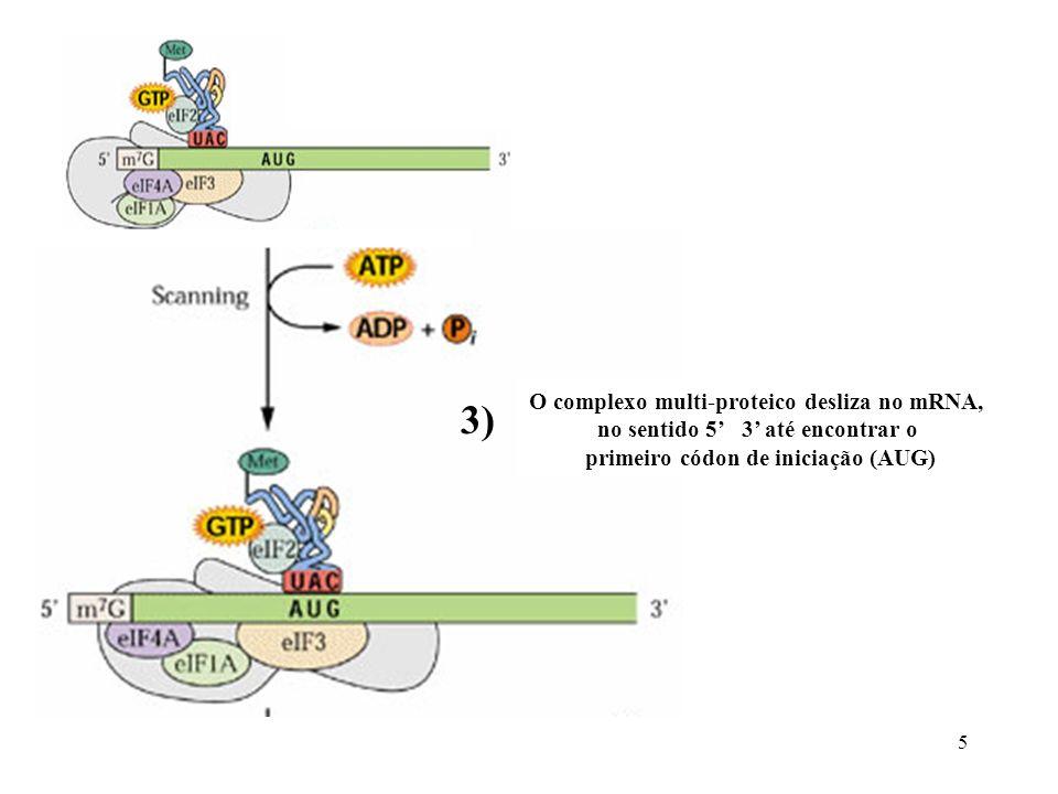3) O complexo multi-proteico desliza no mRNA,