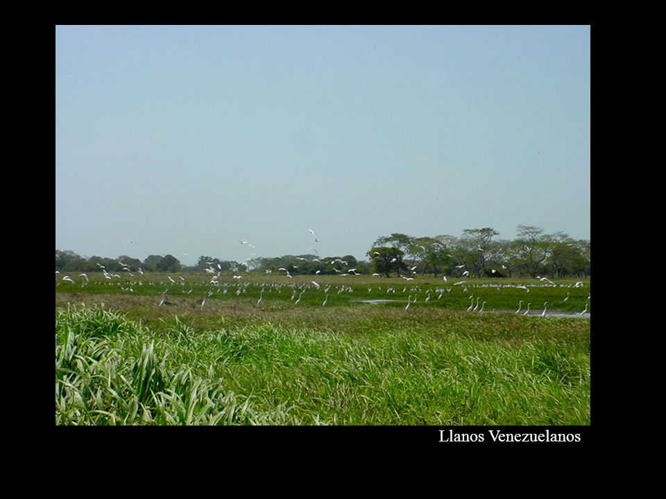Llanos Venezuelanos