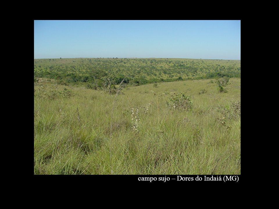 campo sujo – Dores do Indaiá (MG)