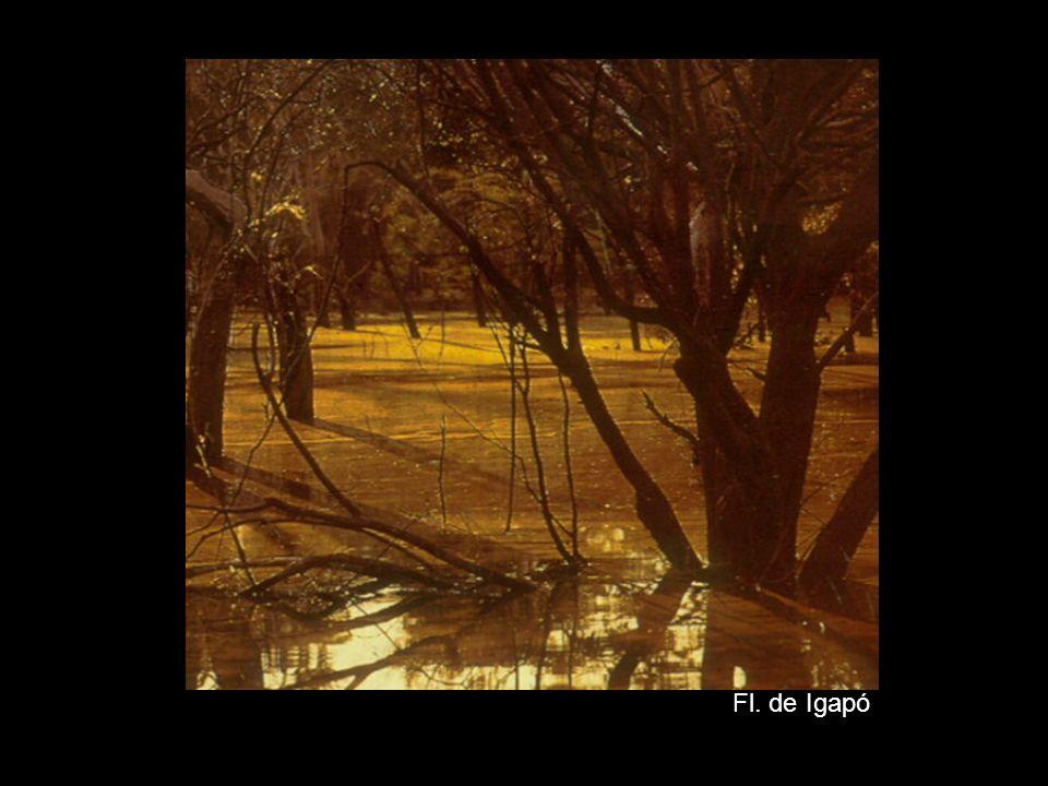 Fl. de Igapó