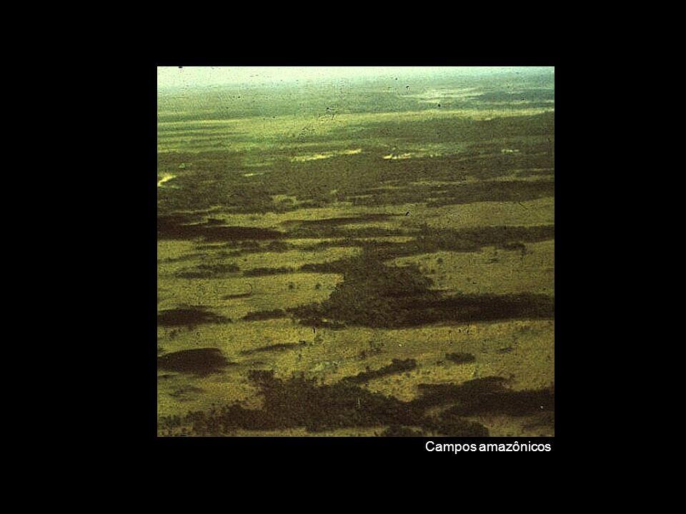Campos amazônicos