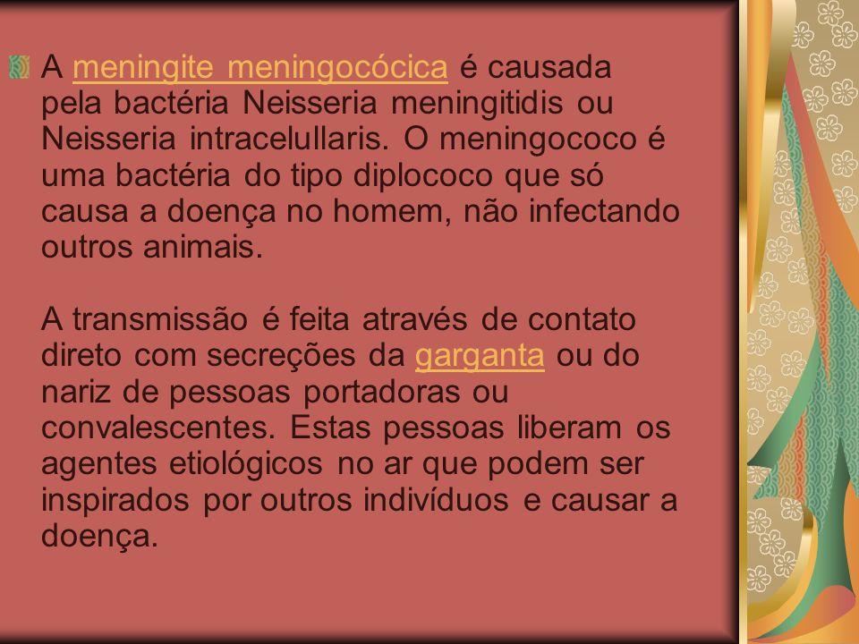 A meningite meningocócica é causada pela bactéria Neisseria meningitidis ou Neisseria intracelullaris.