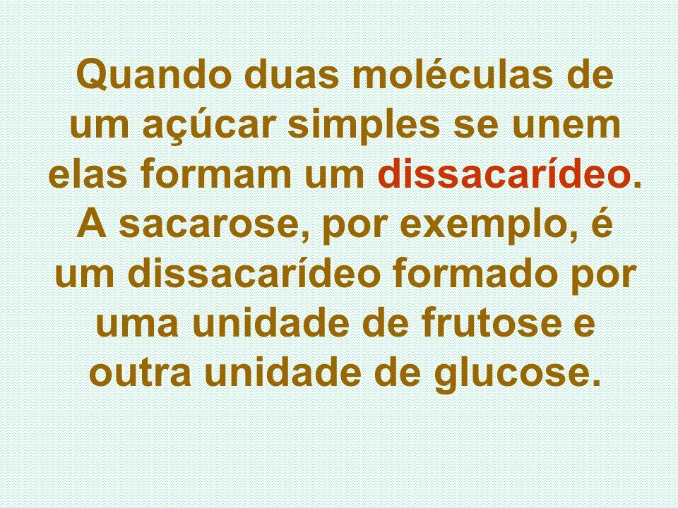 Quando duas moléculas de um açúcar simples se unem elas formam um dissacarídeo.