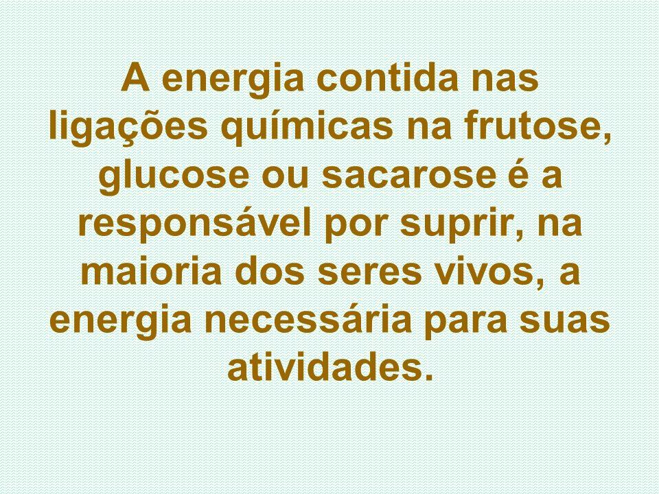 A energia contida nas ligações químicas na frutose, glucose ou sacarose é a responsável por suprir, na maioria dos seres vivos, a energia necessária para suas atividades.
