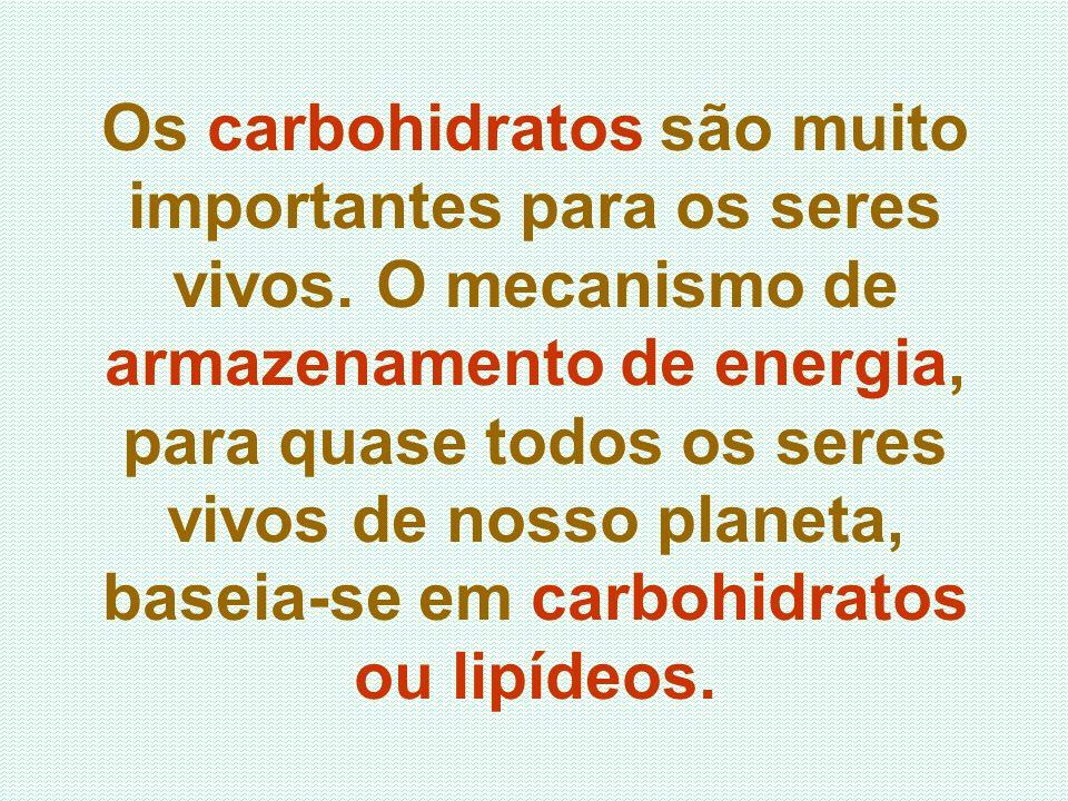 Os carbohidratos são muito importantes para os seres vivos
