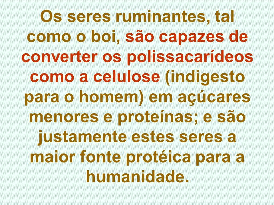 Os seres ruminantes, tal como o boi, são capazes de converter os polissacarídeos como a celulose (indigesto para o homem) em açúcares menores e proteínas; e são justamente estes seres a maior fonte protéica para a humanidade.