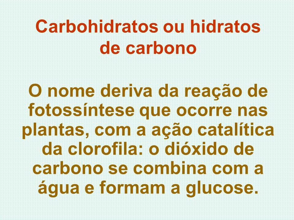 Carbohidratos ou hidratos de carbono