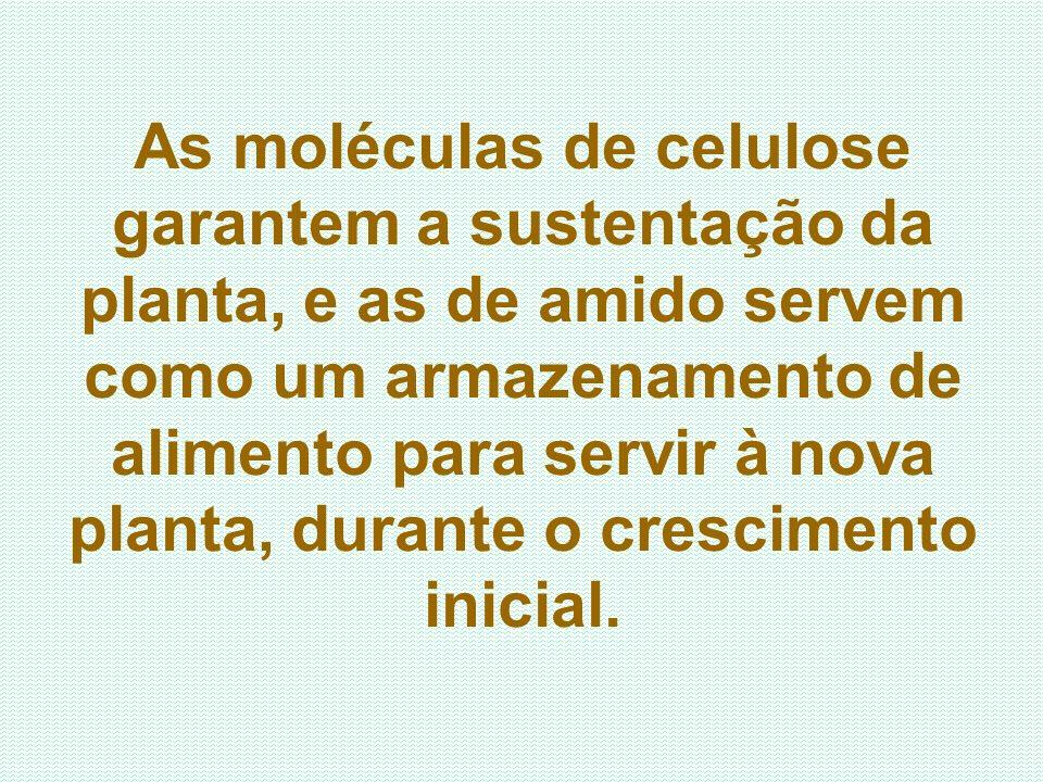As moléculas de celulose garantem a sustentação da planta, e as de amido servem como um armazenamento de alimento para servir à nova planta, durante o crescimento inicial.