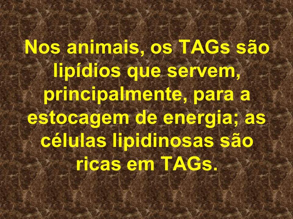 Nos animais, os TAGs são lipídios que servem, principalmente, para a estocagem de energia; as células lipidinosas são ricas em TAGs.