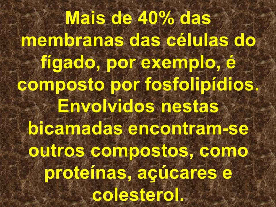Mais de 40% das membranas das células do fígado, por exemplo, é composto por fosfolipídios.