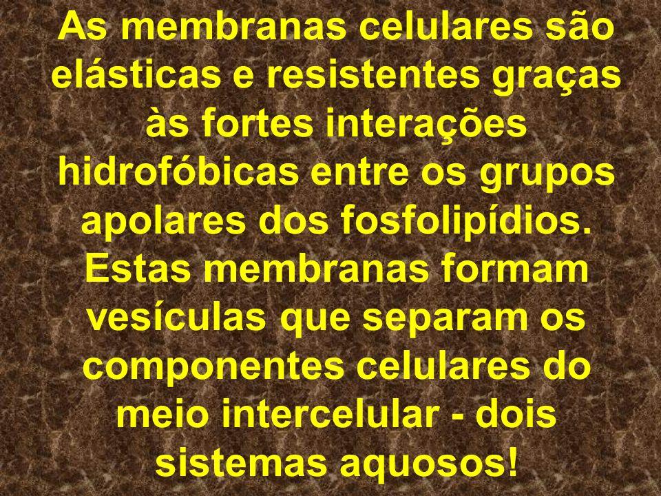 As membranas celulares são elásticas e resistentes graças às fortes interações hidrofóbicas entre os grupos apolares dos fosfolipídios.