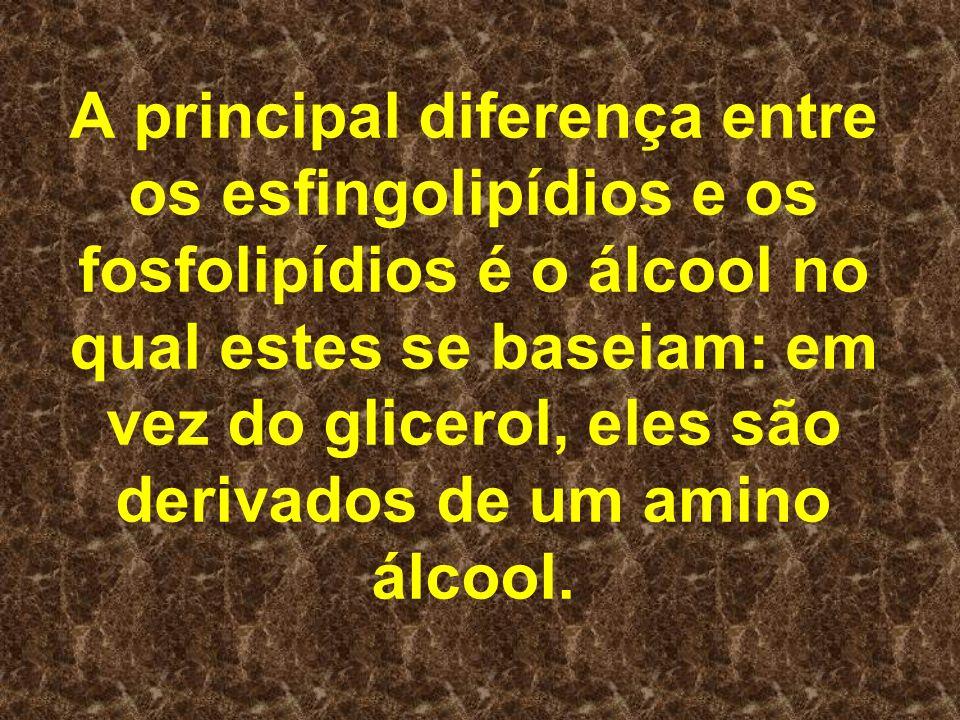 A principal diferença entre os esfingolipídios e os fosfolipídios é o álcool no qual estes se baseiam: em vez do glicerol, eles são derivados de um amino álcool.