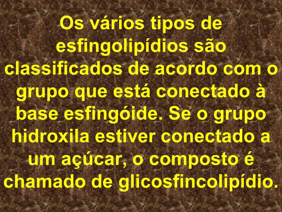 Os vários tipos de esfingolipídios são classificados de acordo com o grupo que está conectado à base esfingóide.