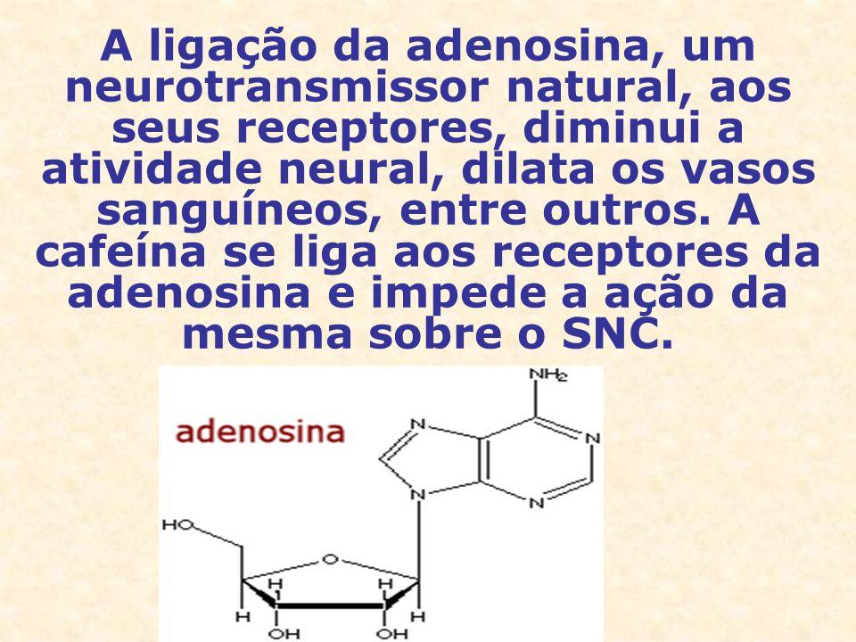 A ligação da adenosina, um neurotransmissor natural, aos seus receptores, diminui a atividade neural, dilata os vasos sanguíneos, entre outros.
