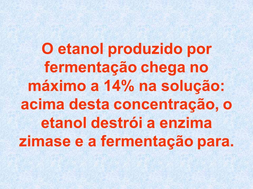 O etanol produzido por fermentação chega no máximo a 14% na solução: acima desta concentração, o etanol destrói a enzima zimase e a fermentação para.