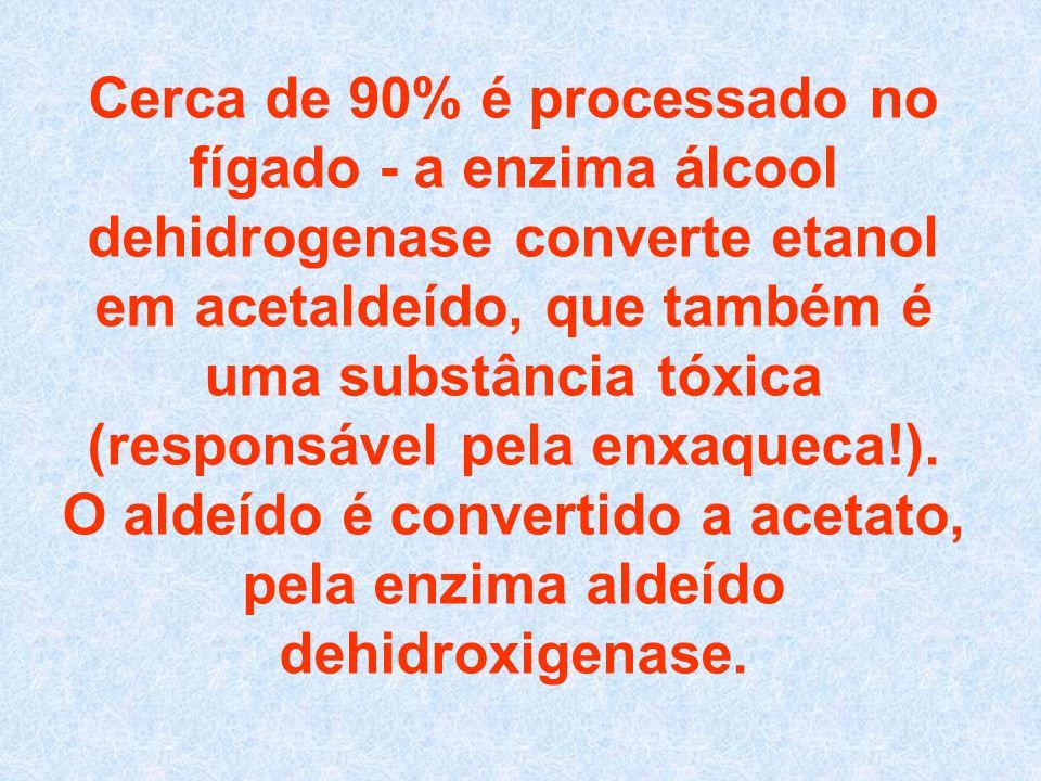 Cerca de 90% é processado no fígado - a enzima álcool dehidrogenase converte etanol em acetaldeído, que também é uma substância tóxica (responsável pela enxaqueca!).