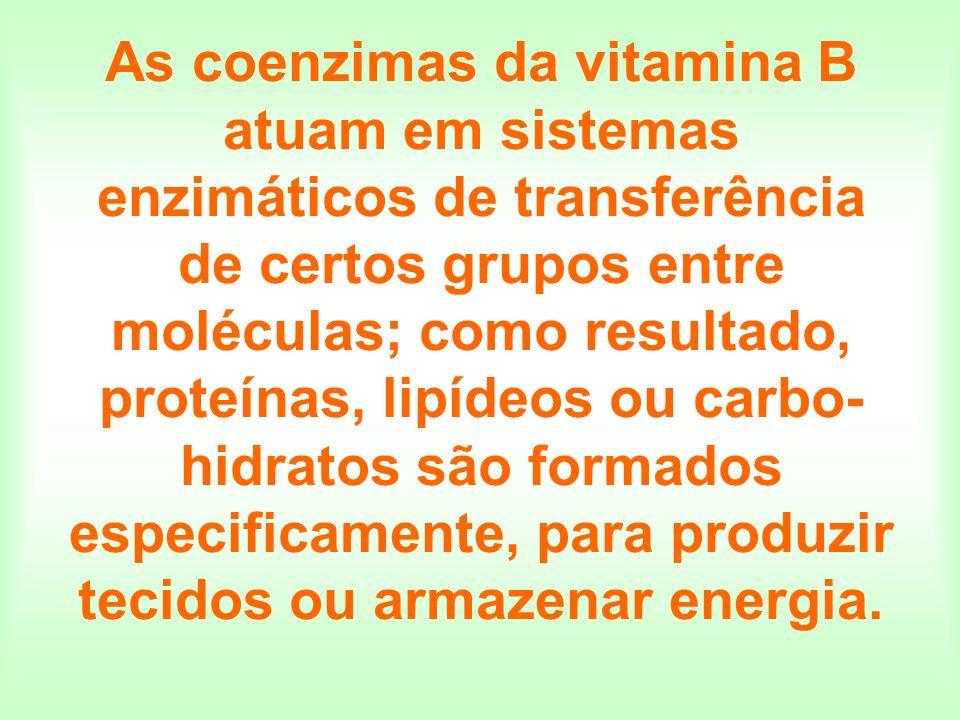 As coenzimas da vitamina B atuam em sistemas enzimáticos de transferência de certos grupos entre moléculas; como resultado, proteínas, lipídeos ou carbo-hidratos são formados especificamente, para produzir tecidos ou armazenar energia.