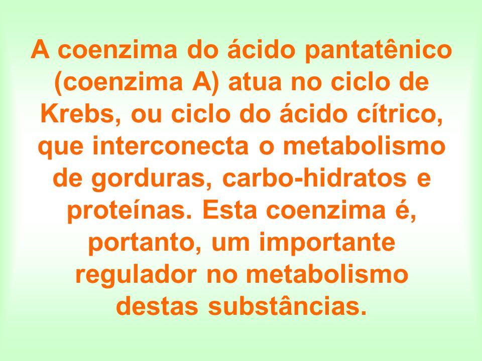 A coenzima do ácido pantatênico (coenzima A) atua no ciclo de Krebs, ou ciclo do ácido cítrico, que interconecta o metabolismo de gorduras, carbo-hidratos e proteínas.