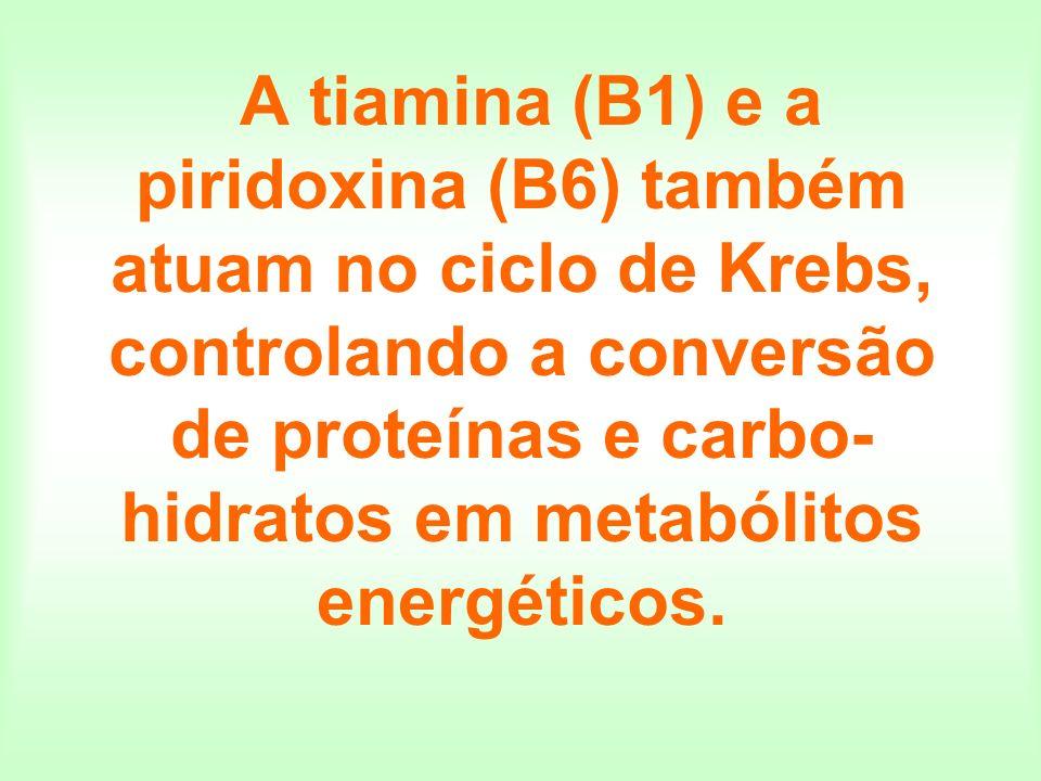 A tiamina (B1) e a piridoxina (B6) também atuam no ciclo de Krebs, controlando a conversão de proteínas e carbo-hidratos em metabólitos energéticos.