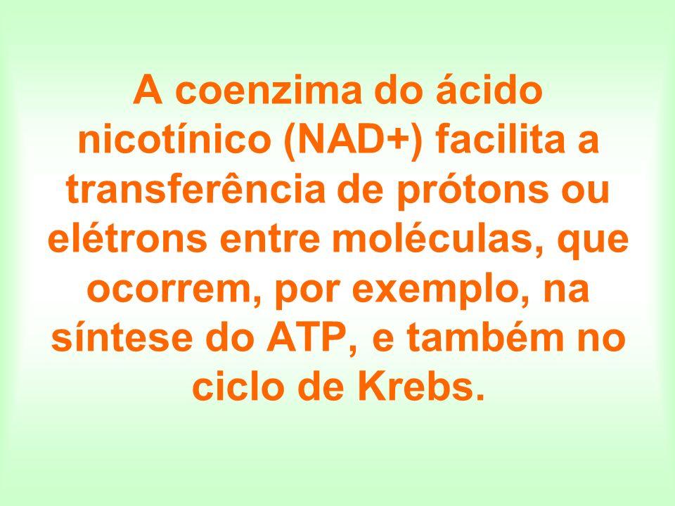 A coenzima do ácido nicotínico (NAD+) facilita a transferência de prótons ou elétrons entre moléculas, que ocorrem, por exemplo, na síntese do ATP, e também no ciclo de Krebs.