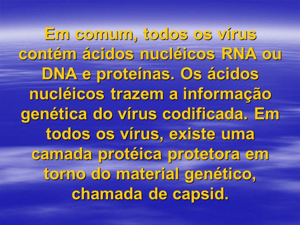 Em comum, todos os vírus contém ácidos nucléicos RNA ou DNA e proteínas.