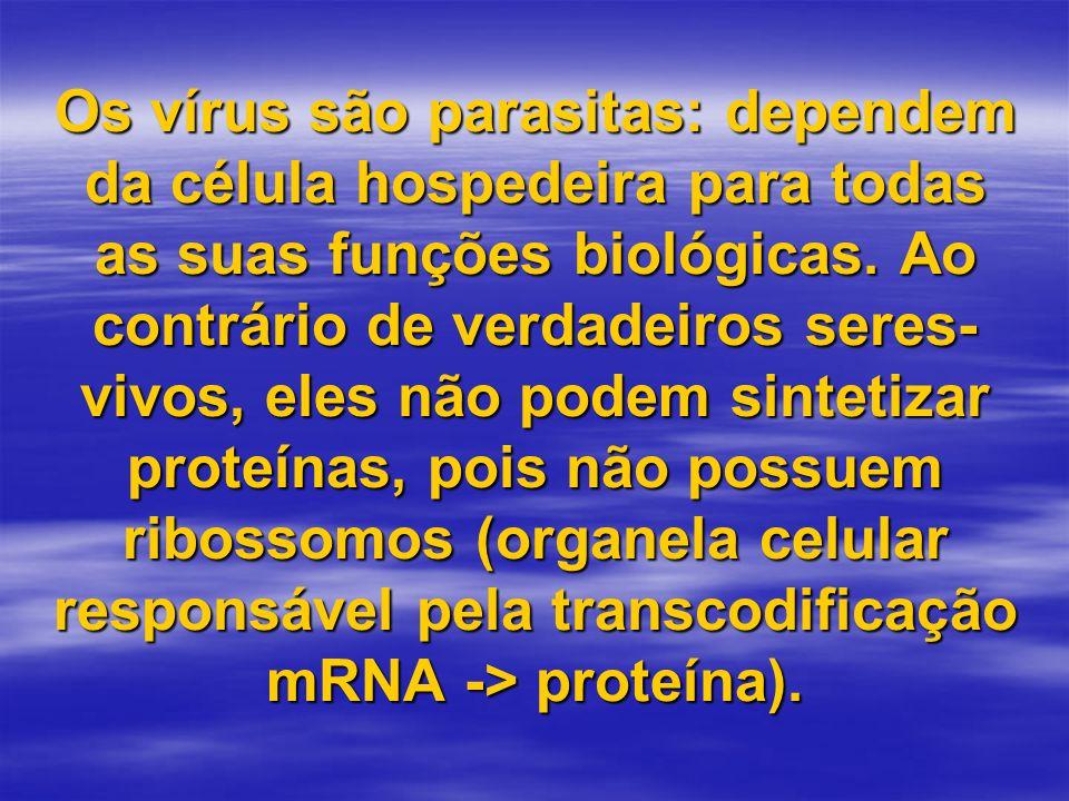 Os vírus são parasitas: dependem da célula hospedeira para todas as suas funções biológicas.