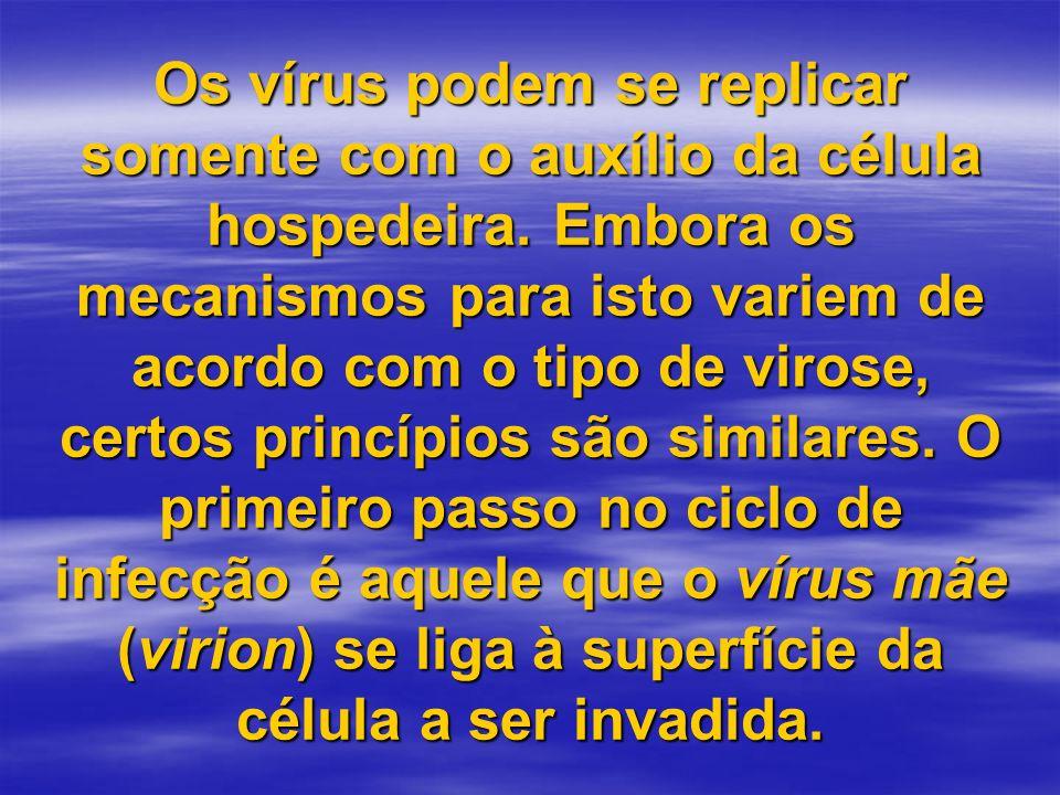 Os vírus podem se replicar somente com o auxílio da célula hospedeira