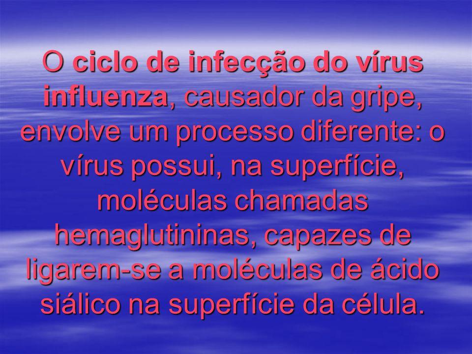 O ciclo de infecção do vírus influenza, causador da gripe, envolve um processo diferente: o vírus possui, na superfície, moléculas chamadas hemaglutininas, capazes de ligarem-se a moléculas de ácido siálico na superfície da célula.