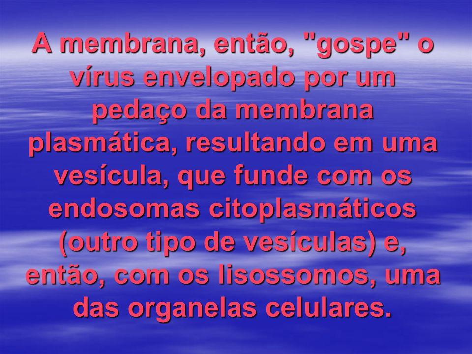 A membrana, então, gospe o vírus envelopado por um pedaço da membrana plasmática, resultando em uma vesícula, que funde com os endosomas citoplasmáticos (outro tipo de vesículas) e, então, com os lisossomos, uma das organelas celulares.