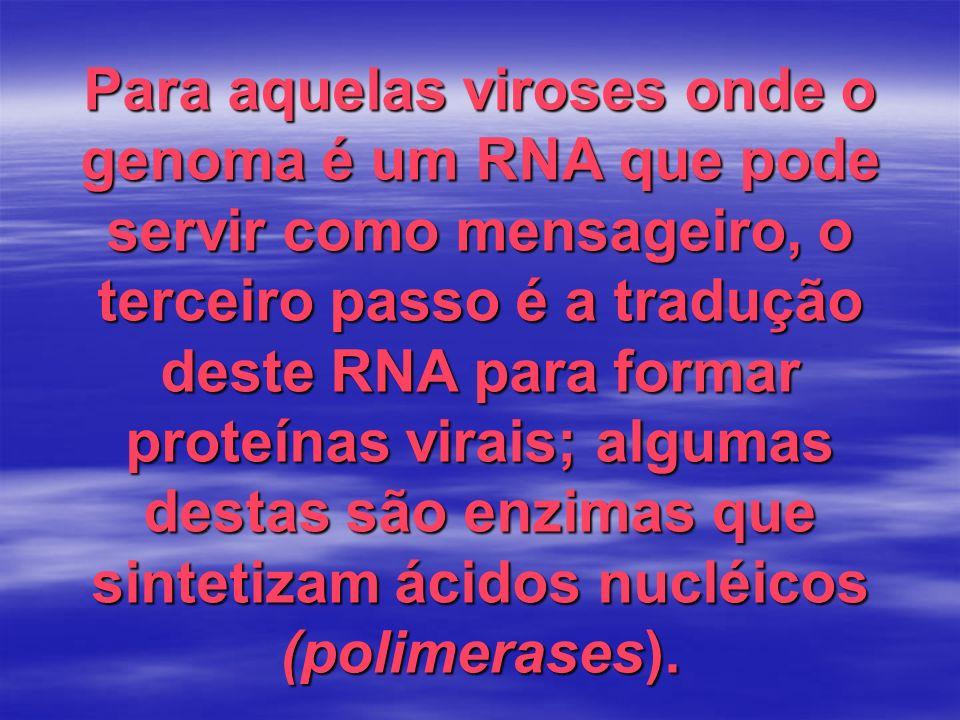 Para aquelas viroses onde o genoma é um RNA que pode servir como mensageiro, o terceiro passo é a tradução deste RNA para formar proteínas virais; algumas destas são enzimas que sintetizam ácidos nucléicos (polimerases).