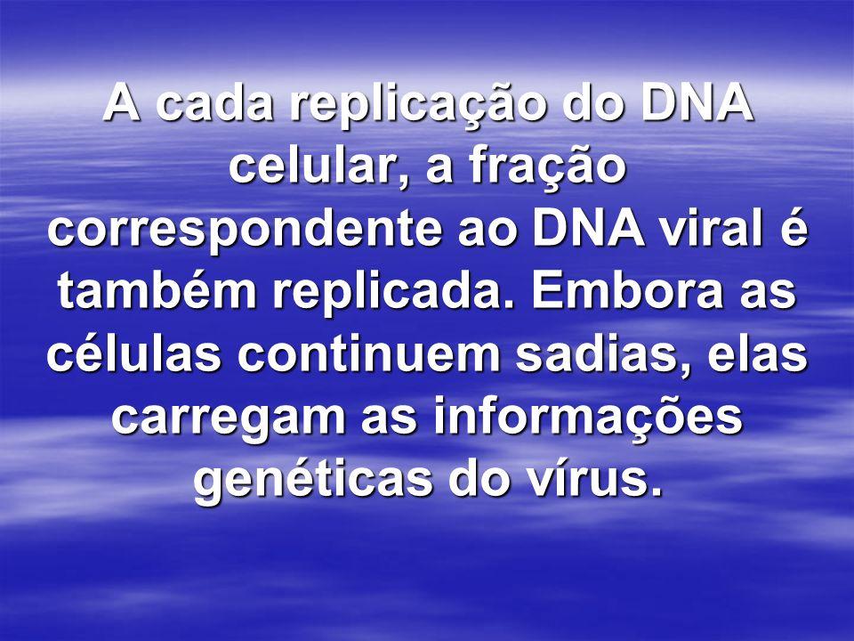A cada replicação do DNA celular, a fração correspondente ao DNA viral é também replicada.