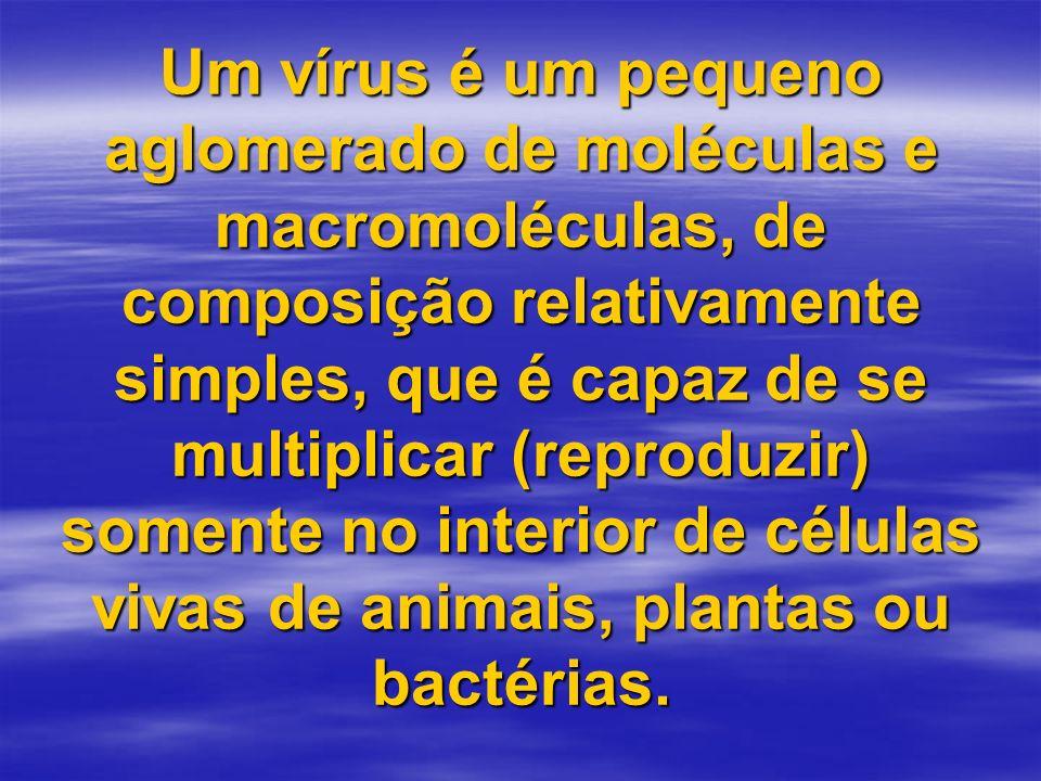 Um vírus é um pequeno aglomerado de moléculas e macromoléculas, de composição relativamente simples, que é capaz de se multiplicar (reproduzir) somente no interior de células vivas de animais, plantas ou bactérias.