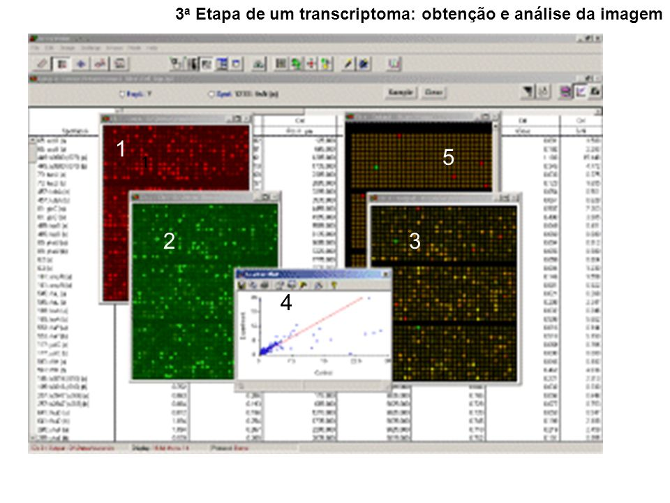 3a Etapa de um transcriptoma: obtenção e análise da imagem
