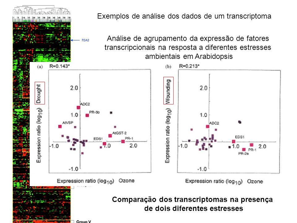 Comparação dos transcriptomas na presença de dois diferentes estresses